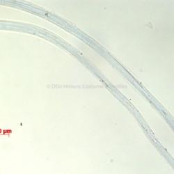 001.1986.205.1.1-19-2015.BF.200X.MM.rayonacetate.dressnet.jpg