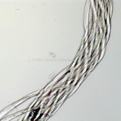 Synthetic Fiber